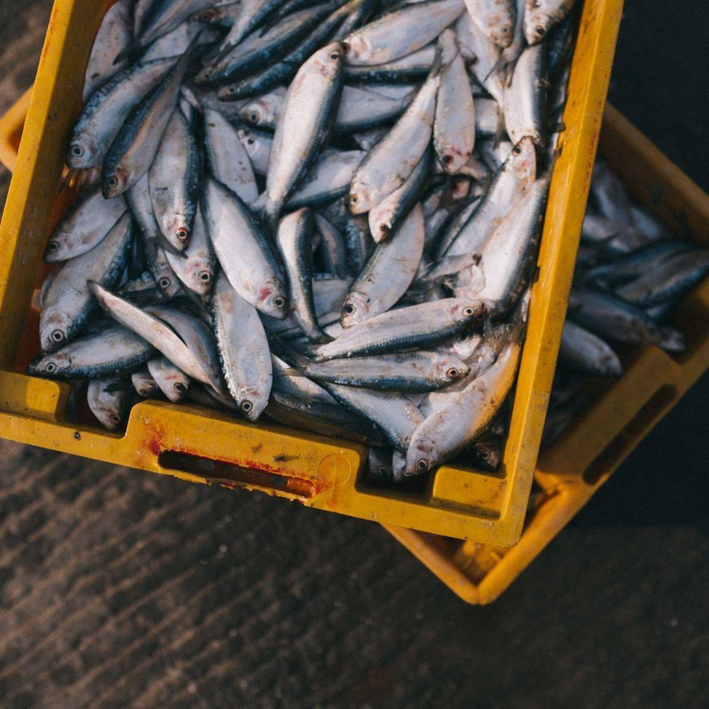 Coldiretti, stop a pesce fresco, scatta fermo pesca
