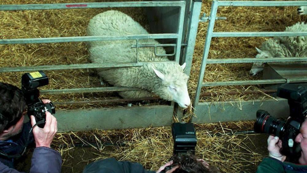 25 anni fa l'annuncio che rivoluzionò la biologia: nasceva Dolly, la pecora creata da una clonazione
