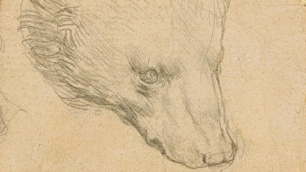 """Asta """"storica"""" oggi a Londra da Christie's, all'incanto un disegno di Leonardo da Vinci"""