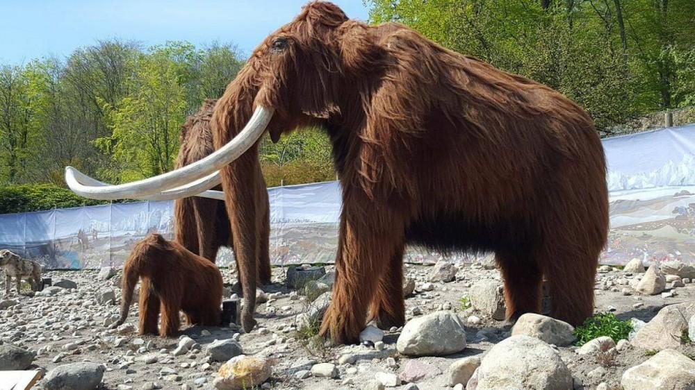 GB, gli scienziati hanno raccolto 15 milioni di dollari per un esperimento: riportare in vita il mammut lanoso