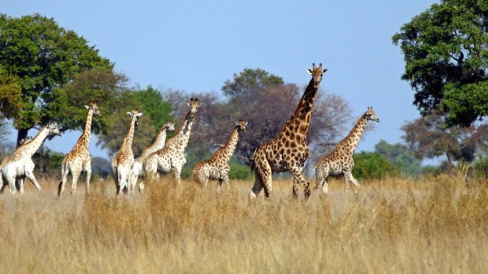 Giornata Mondiale della Biodiversità, istituita dall'Onu per celebrare la ricchezza della natura.  Il ritorno dei grandi felini in Europa