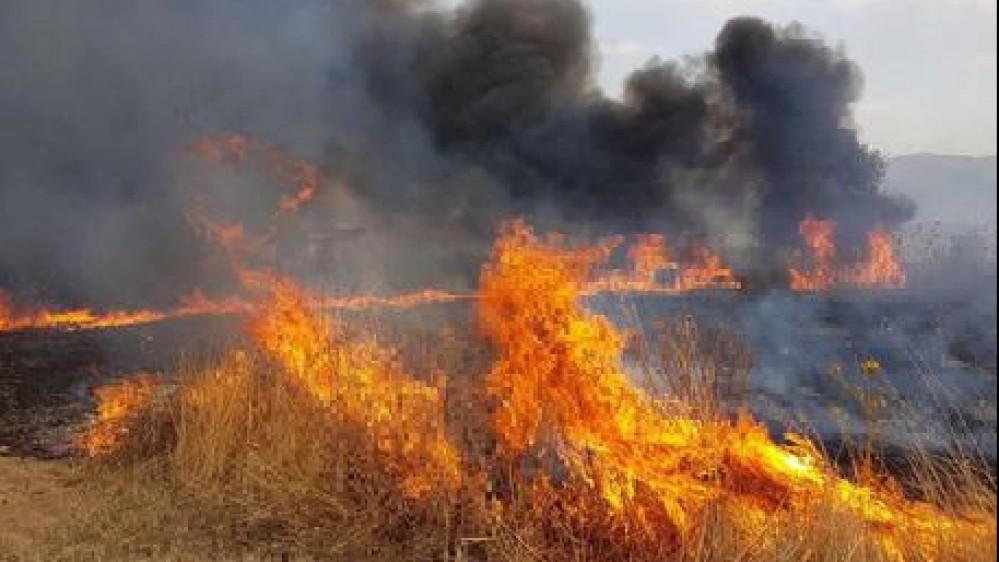 """Incendi, ministro Cingolani """"E' colpa nostra nel 70% dei casi"""". Ma anche dei cambiamenti climatici"""