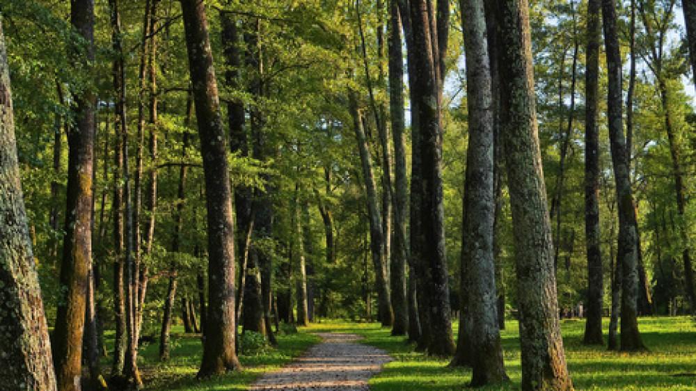 Oggi è la Giornata Europea dei Parchi, in Italia le prime aree naturali protette furono istituite nel 1922